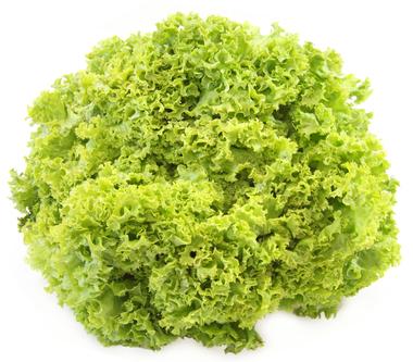 EAN:4949492301713 Frisee Salat 9er #ULITA  bei Wellonga 2,30 €