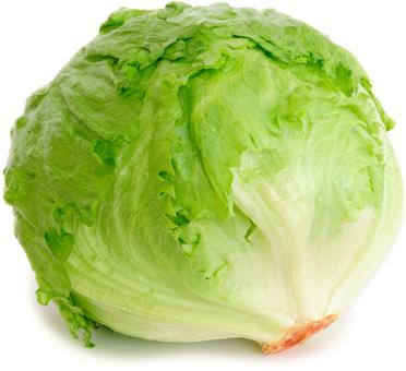 EAN:4949492301720 Eisberg Salat Stück #ULESP  bei Wellonga 1,95 €
